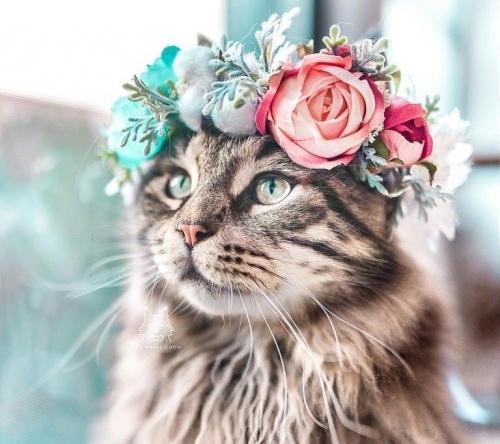 Сегодня, 1 марта, – День кошек. Всех кошек и кошатников с праздником!